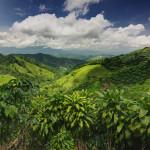 jungle-natural-life